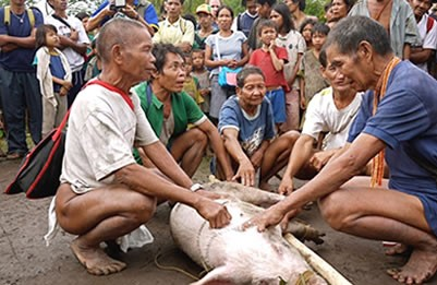 Five Buid mediums chanting prayers above a pig. Photo taken by Ms. Reggie Aquino and provided courtesy of the Asian NGO coalition for Agrarian. Reform and Rural Development (ANGOC).