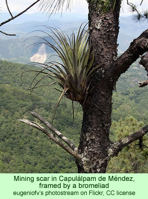 Mining scar in Capulalpam de Mendez, framed by a bromeliad