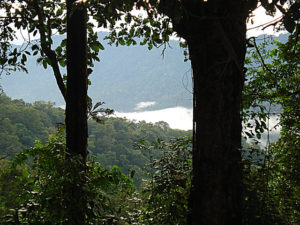 The forest of the Pathanamthitta District near Chalakkayam