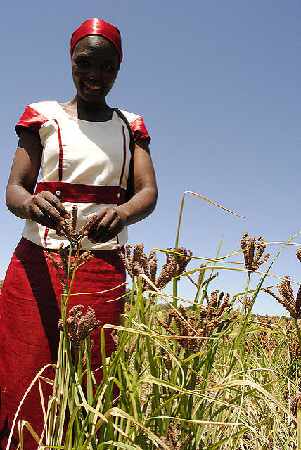 Ms. Elizabeth Azaria, a farmer in the Iramba District of Tanzania, in a finger millet field on her farm