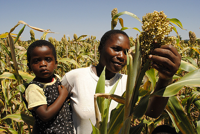 Ms. Sarah Amon, holding her daughter, examines some sorghum in a field on her farm in the Iramba District of Tanzania
