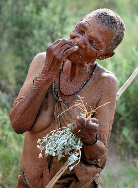 An elderly San woman in Botswana holding a plant she has gathered