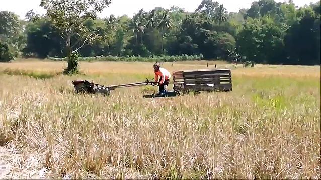 A farmer driving a cart through an Isan rice paddy