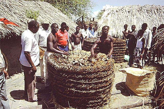 Dried fish from Lake Rukwa, in the Rukwa Region