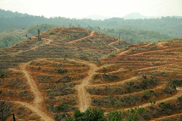 Deforestation in the Gua Musang District of Kelantan