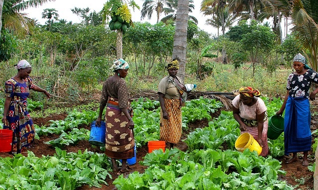 Tanzanian women working in a garden (Photo by tpsdave on Pixabay, Creative Commons license)