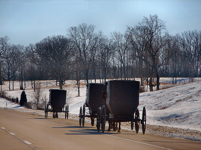 Amish buggies in Indiana without slow-moving vehicle tapes or triangles, possibly Swartzentrubers (Photo by Cindy Cornett Seigle on Flickr, Creative Commons license)
