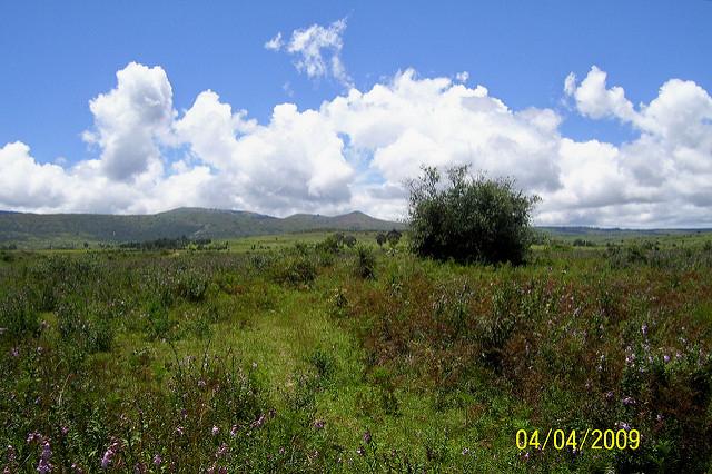 A KAESO tree plantation site near Sumbawanga