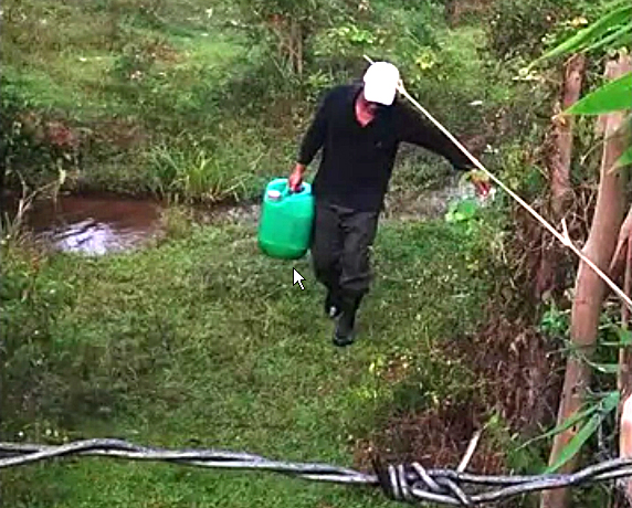 Carrying water to a Semai garden