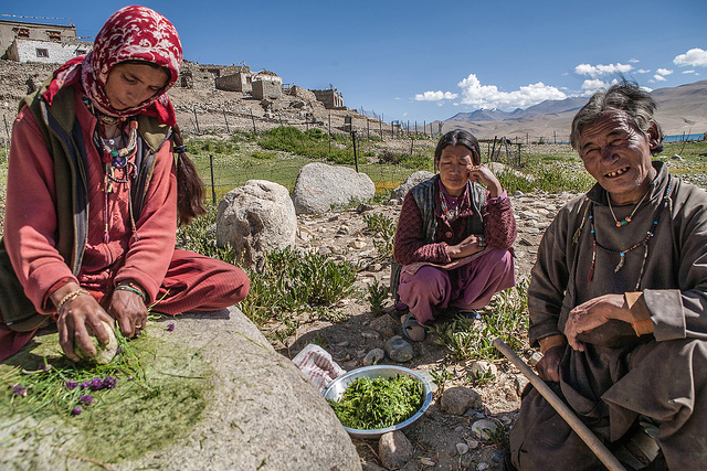 Women in Korzok, Ladakh, grinding spices in the traditional way