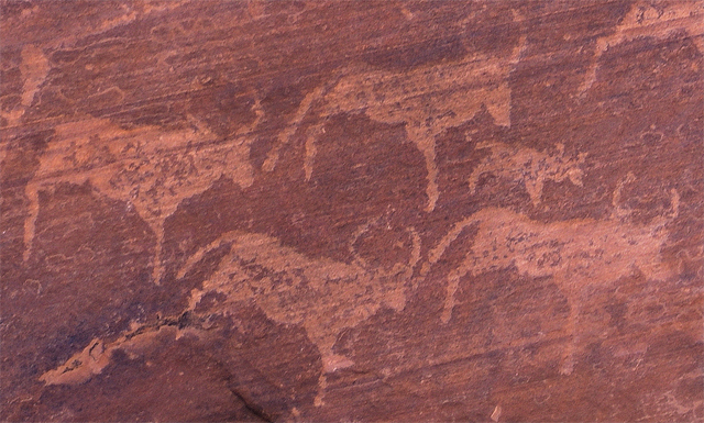 Ancient San rock art depicting cattle, located at Twyfelfontein, Namibia