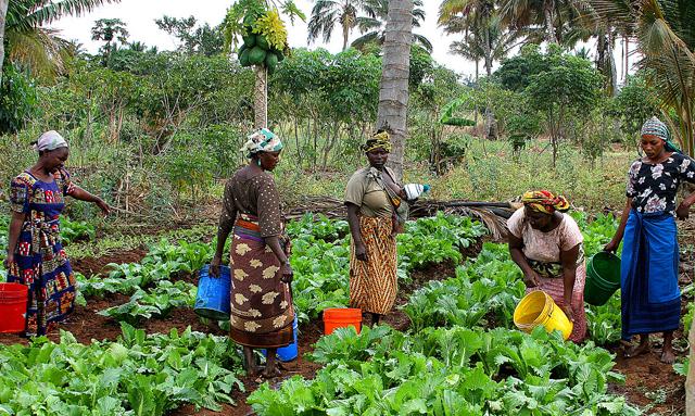 Tanzanian women farmers