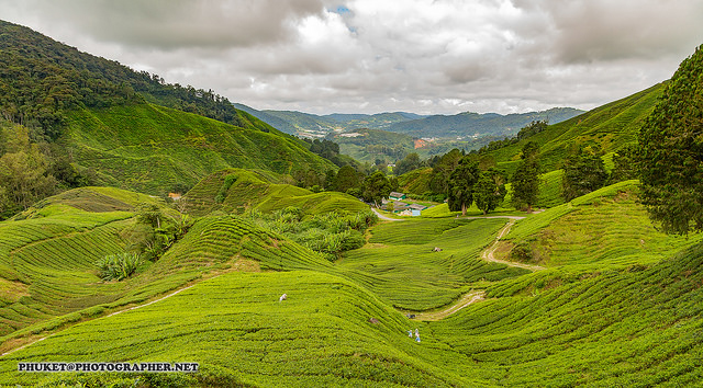 A view of the Cameron Highlands