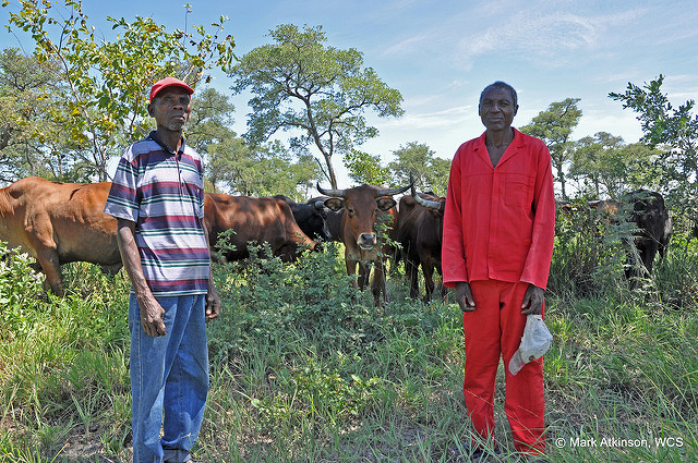 Cattle farmers in a conservancy in the Caprivi Strip