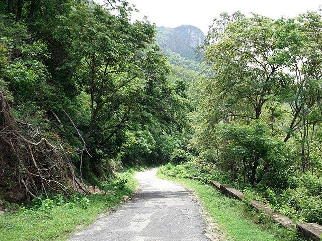The Anamalai Tiger Reserve