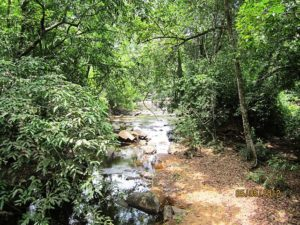 A stream in the Athirappilly Vazhachal forest