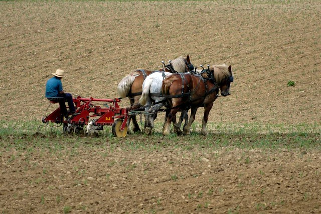 Ohio Amish farmer (Photo by Scott Griffith on Flickr, Creative Commons license)