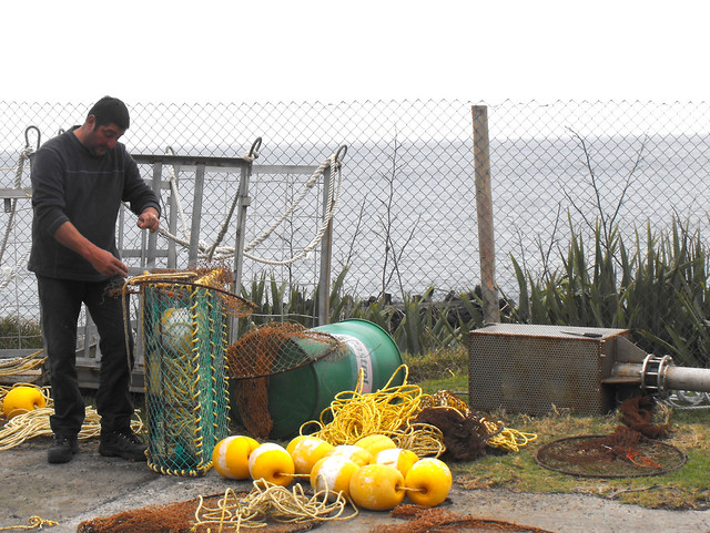 A Tristan lobster fisherman with his traps (Photo by Spixey on Flickr, Creative Commos license)